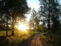 Keskiyön aurinko, peltoa ja maantie puiden välissä.