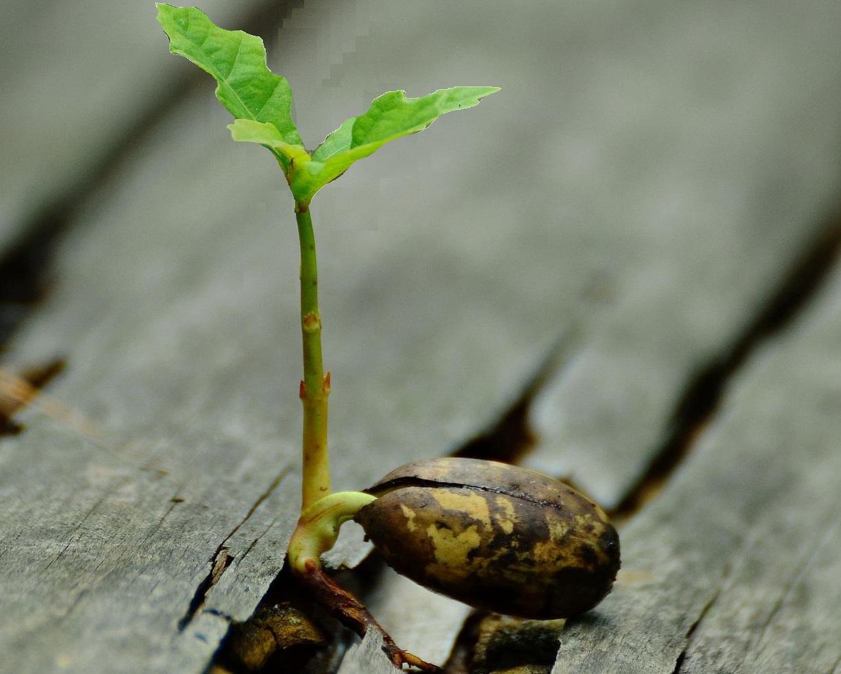 Taimi kasvaa siemenestä.